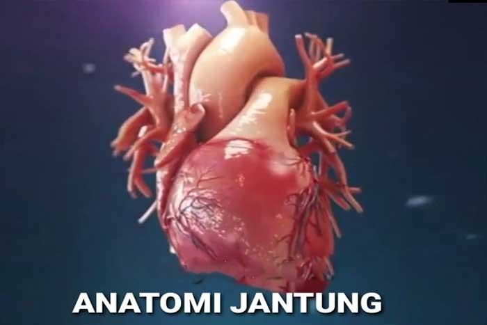 Mengenal Anatomi Jantung