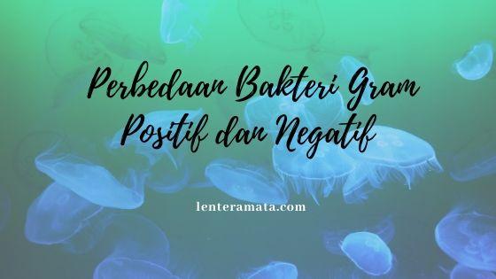 perbedaan bakteri gram positif dan negatif
