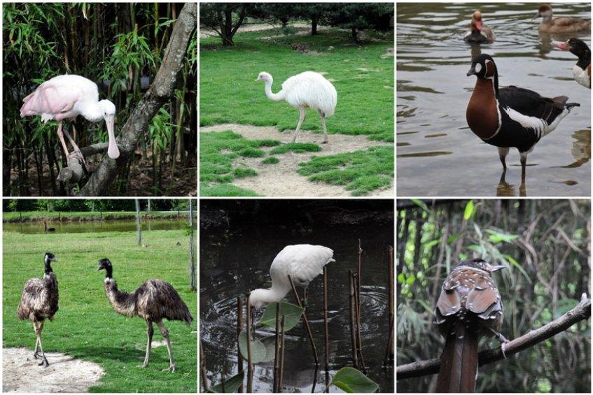 Parc des Oiseaux Villard les Dombes