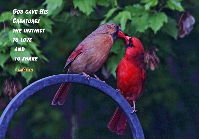IMG_9091 Cardinalss