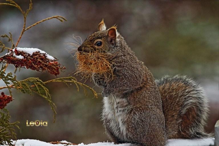 img_4453-squirrel-copy