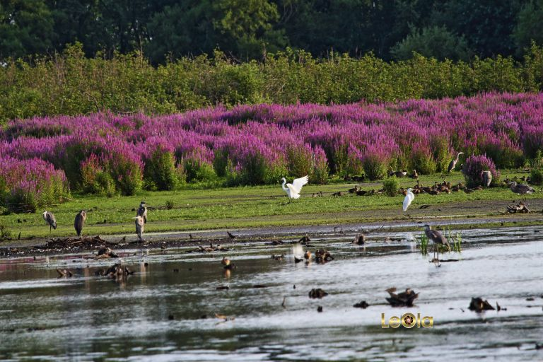 img_6848-cranberry-marsh-copy