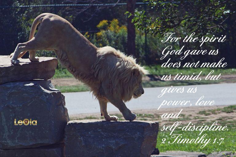 img_9073-albino-lion
