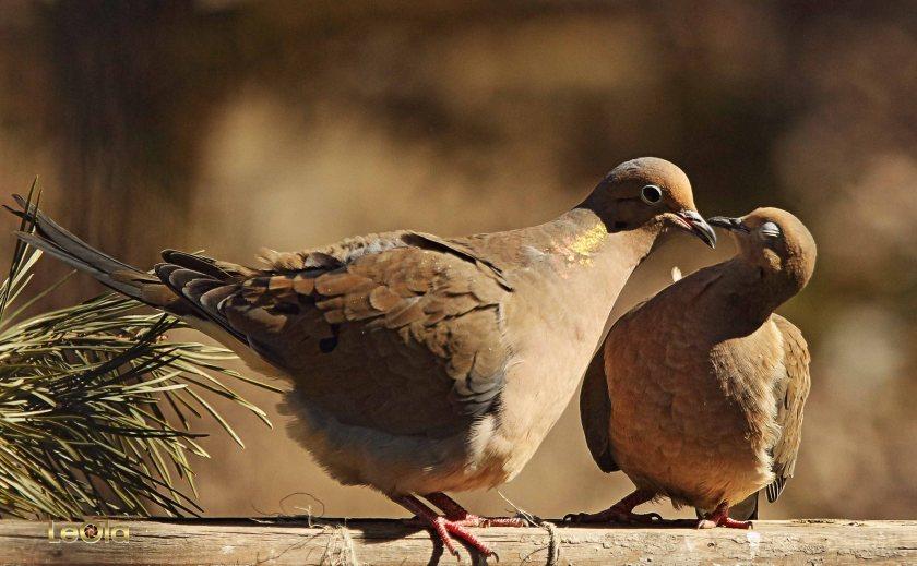 IMG_9083 Doves copy.jpg
