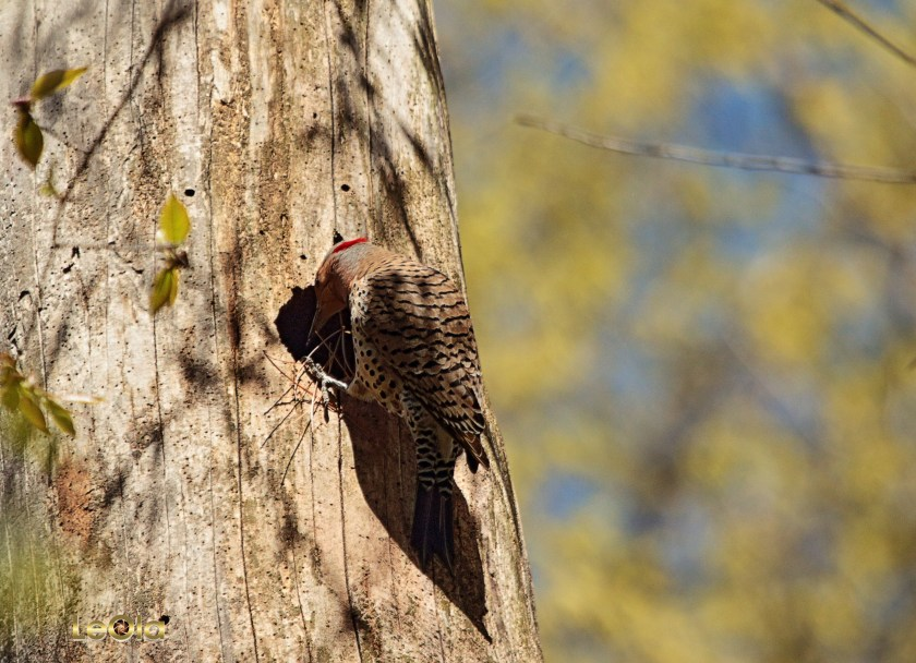 IMG_1821 Flicker copy.jpg