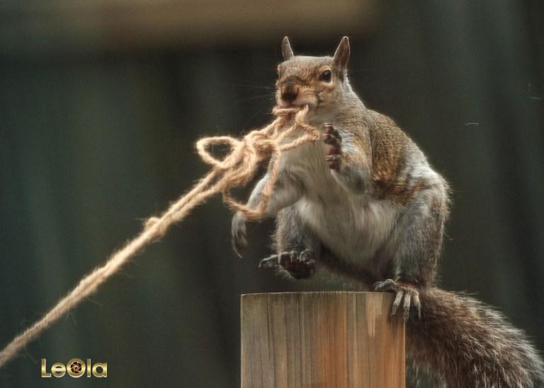 IMG_2569 Squirrel copy.jpg