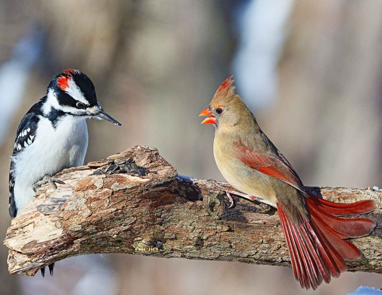IMG_3062 Downey & Cardinal