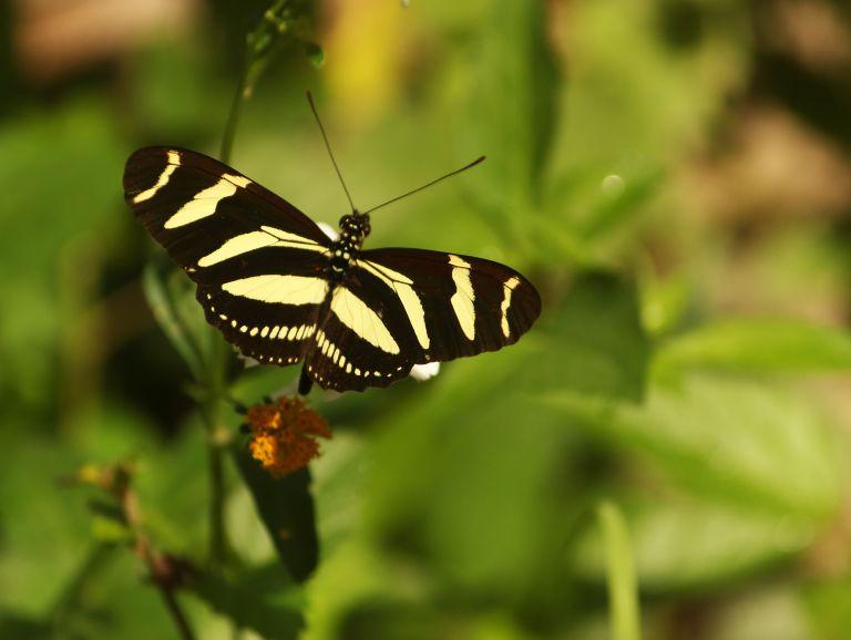 IMG_0001 Butterflya.JPG