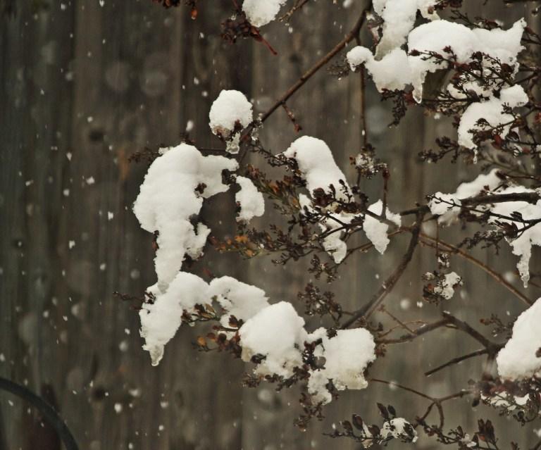IMG_0158 Snowa.JPG
