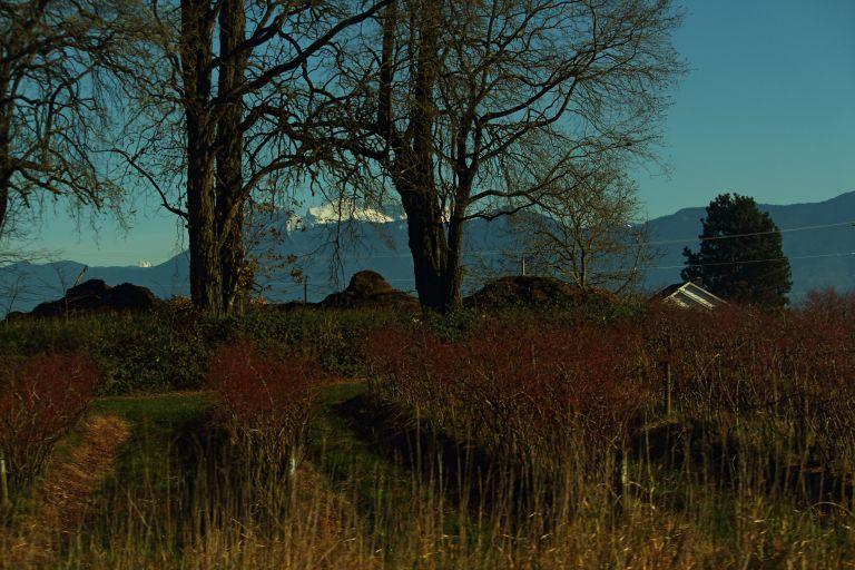 IMG_0245 Fraser Valley.JPG