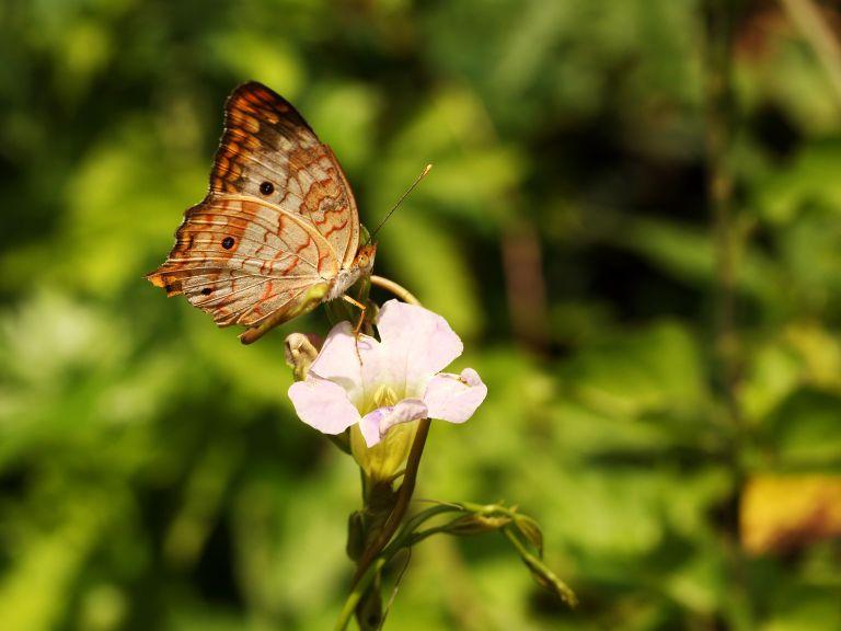 IMG_0332 butterflya
