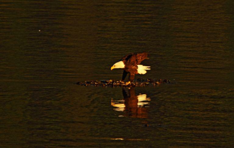 IMG_0334 Sandpiper Sunset.JPG