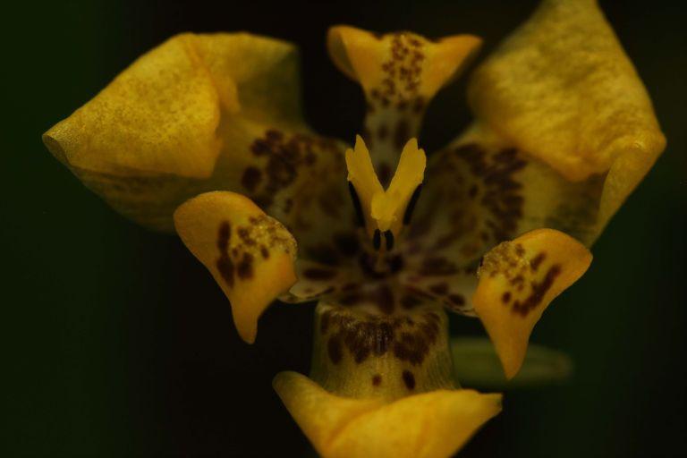IMG_8112 Flower