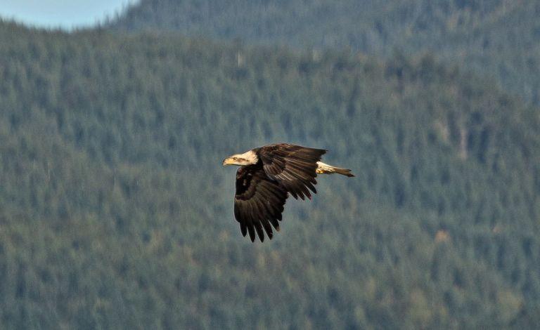 IMG_-1021 Fraser River