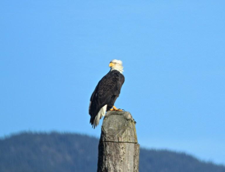 IMG_0700 Fraser River.JPG