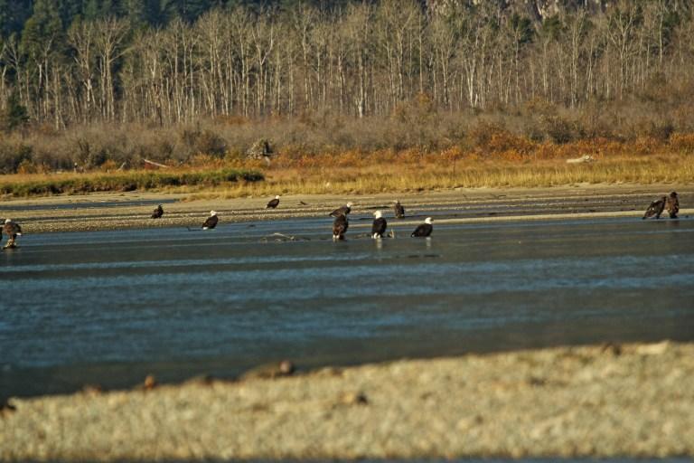 IMG_1302 Fraser River.JPG