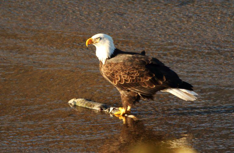 IMG_1855 Eagle