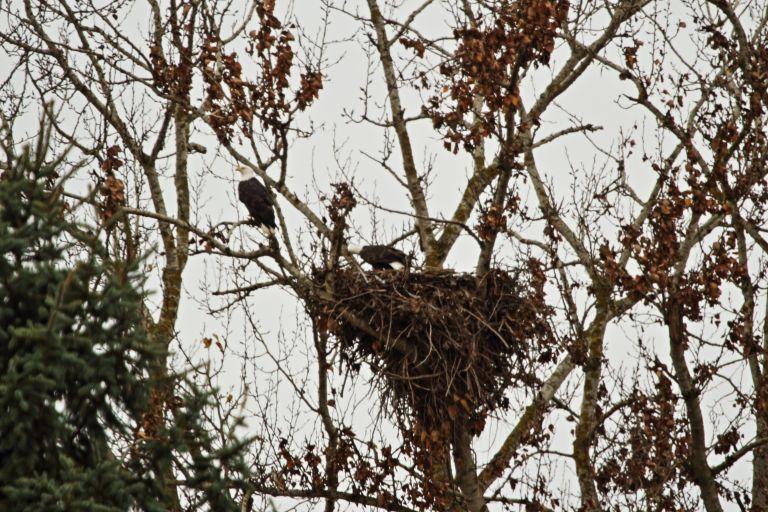 IMG_5201 Eagles Nest.JPG