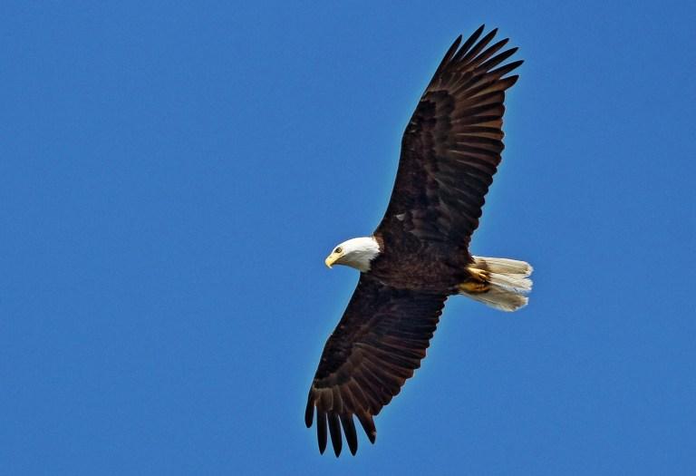 IMG_6303 Eagle