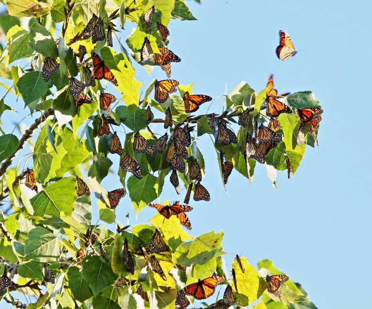 IMG_3068 Butterflies a.JPG