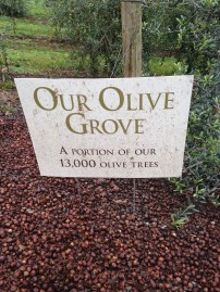 Oregon Olive Mill--Olive groves