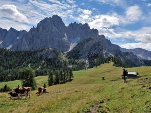 Picco di Vallandro - Alta Via n° 3