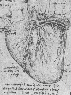 da Vinci and the Heart: Anatomical Exploration Through the Eyes of Leonardo