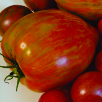 Magnificent tomatoes