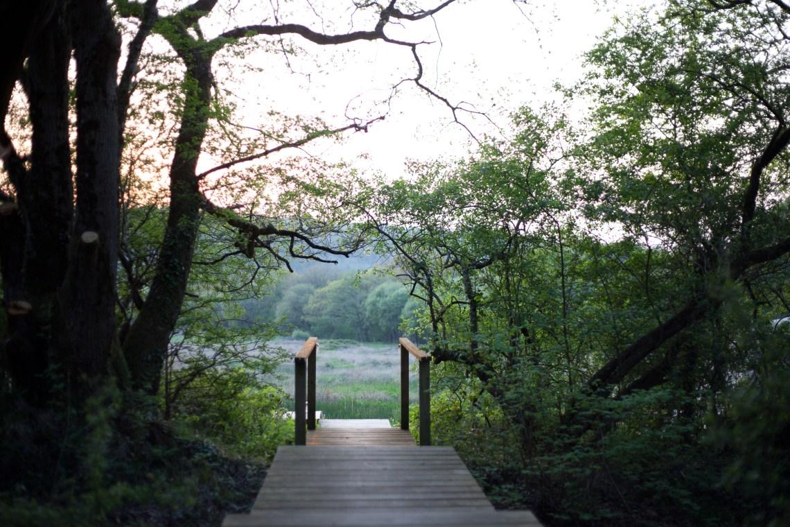 Bridge into a field. By Leonie Wise