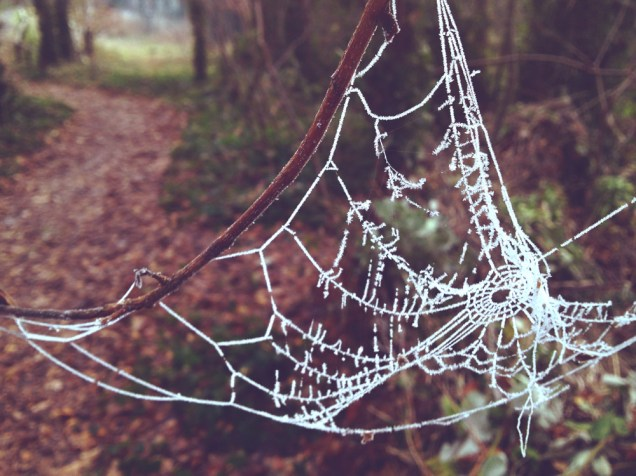 photograph of a frozen spider's web. copyright leonie wise