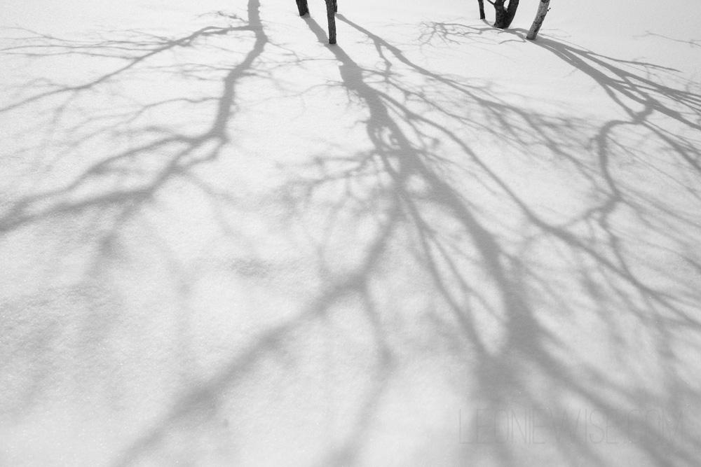 shadows-and-horizons-100