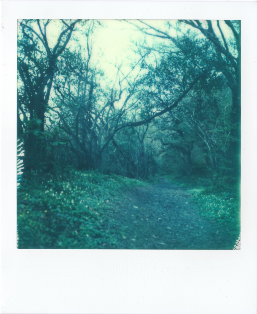 polaroid photograph of a pathway. copyright leonie wise all rights reserved