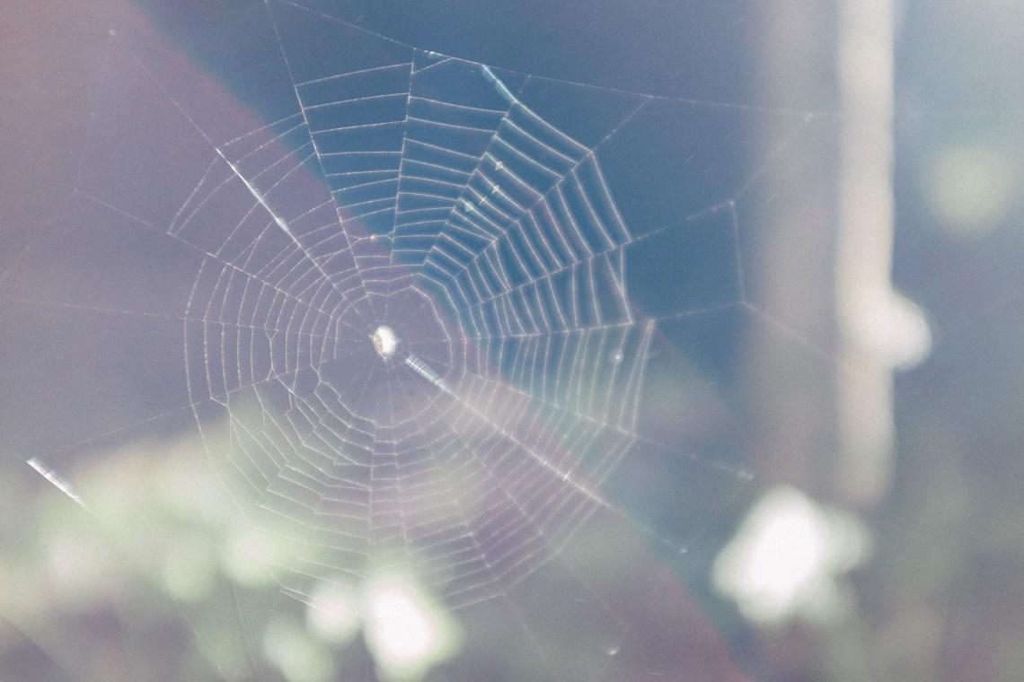 spider web by leonie wise