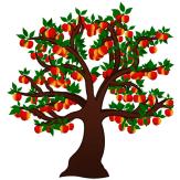Apfelbaum 03