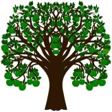 Apfelbaum 04