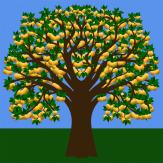 Apfelbaum 05