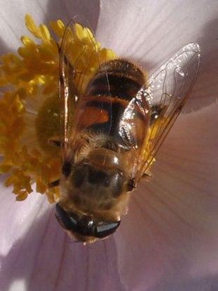 Blume – Biene 2