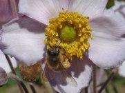 Blume – Biene 3