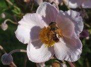 Blume – Biene 5