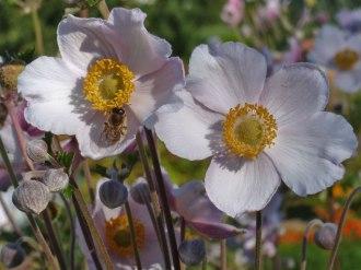 Blume – Biene 6