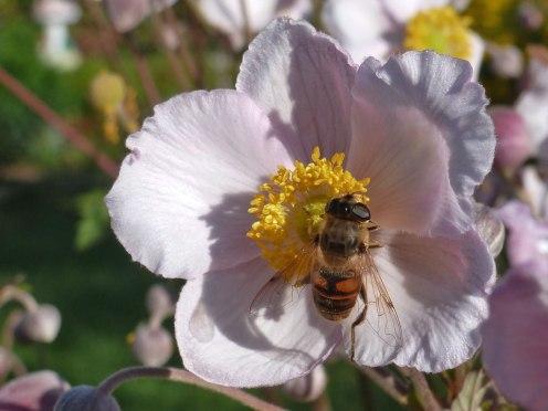 Blume – Biene 9