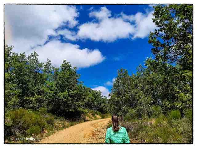 camino entre verde y nubes en cielo azul