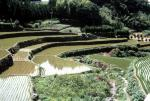 Terrace farming - rice