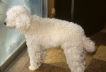 Goldbergs' dog