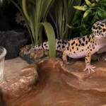 A Beginner S Guide To Leopard Gecko Housing And Setup Leopard Gecko Care