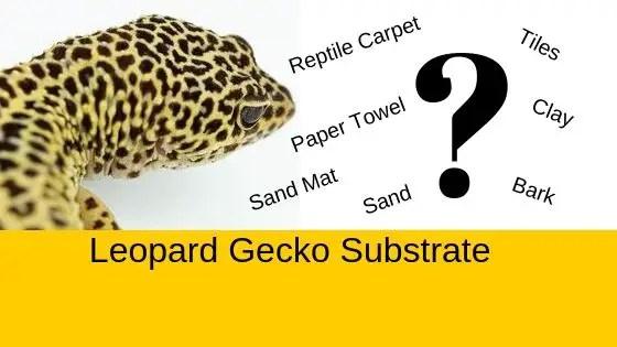 The Great Leopard Gecko Substrate Debate - Best Leopard ...Leopard Gecko Hatchling Tank Setup