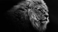 leone7