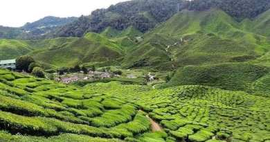 Tips ke CAMERON HIGHLANDS🍓