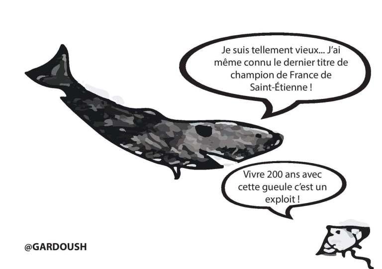 requin du Groenland dessin