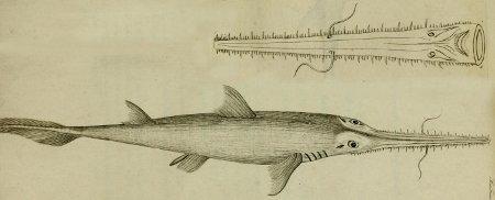 L'évolution dans le temps des requins